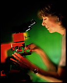 Technician using a binocular light microscope