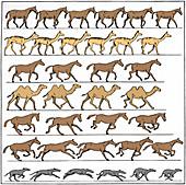 Animal motion diagram