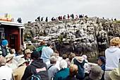 Tourism,Farne Islands,UK