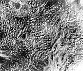 Surface features in Ovda Regio,Venus