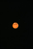 Planet Mars,through an amateur telescope