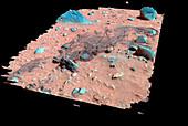 Mars surface,3D