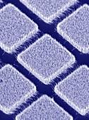 Gallium nitride nanowires,SEM