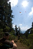 Monarch butterfly nature reserve,Mexico