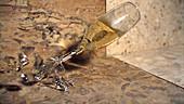 Champagne glass smashing