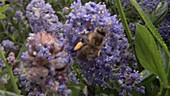 Honey bee feeding