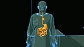 MRI tracer through bloodstream