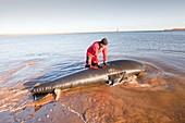 Marine wildlife rescue service training