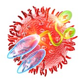 Blinatumomab antibody molecule,artwork