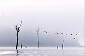 Cormorants flying over water