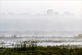 Wetlands in mist,India