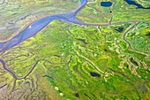 Salt marshes from the air