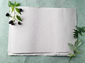 Küchenpapier und Zweig mit Brombeeren