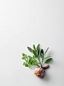 An arrangement of chervil, sage and garlic