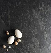 Goose eggs and quail eggs
