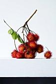 Rambutanfrüchte am Zweig