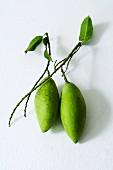 Zwei grüne Thaimangos