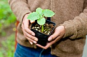 A person holding a young plant in a pot