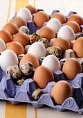 Stillleben mit weissen und braunen Hühnereiern sowie Wachteleiern