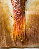 A close-up of a baked red snapper tail