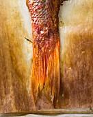 Close-up (Fischschwanz) von einem gebackenen Red Snapper