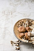 Various fresh mushrooms on plate