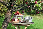 Freshly harvested apples and a food mill on a wooden table under an Ingrid Marie apple tree