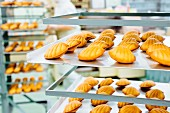Freshly baked madeleines in a commercial bakery