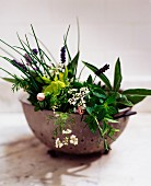 Herbs and herb flowers in a vintage colander
