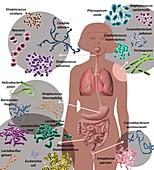 Human microbiome,illustration