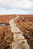 Stone path over peatland