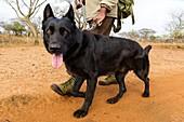 Anti-poaching dog patrol