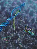 Transcription producing tRNA,artwork