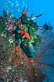 Coral reef,sea fan and reef fish