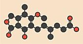 Mycophenolate or mycophenolic acid drug