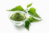 Stinging nettle powder in a glass bowl