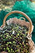 Oliven im Flechtkorb