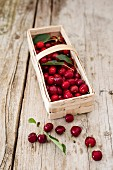 Freshly harvested cherries in a basket on a rustic wooden table