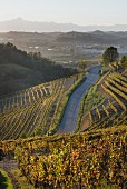 A path through a vineyard in the Barbaresco DOCG with a view of the Tanerotal Valley