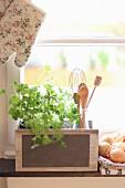 Frischer Koriander neben Küchenutensilien auf Fensterbank