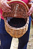A man holding a basket of freshly picked blackberries
