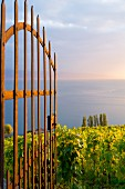 A view of the Lavaux vineyards on Lake Geneva, Switzerland