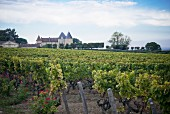 Chateau D'Yquem, winery in France