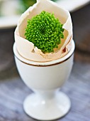 Green dahlia in egg shell as Easter decoration