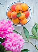 Fresh apricots in an enamel bowl