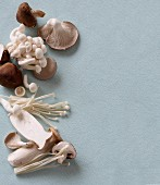 An arrangement of various fresh oriental mushrooms
