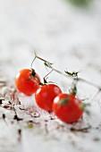 Drei Cherrytomaten an der Rispe