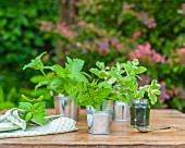 Three different types of mint in tin buckets on a wooden table in a garden