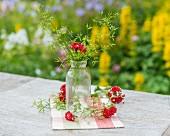 Kerbel in Glasflasche auf Gartentisch