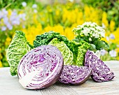 Sliced red cabbage and savoy cabbage
